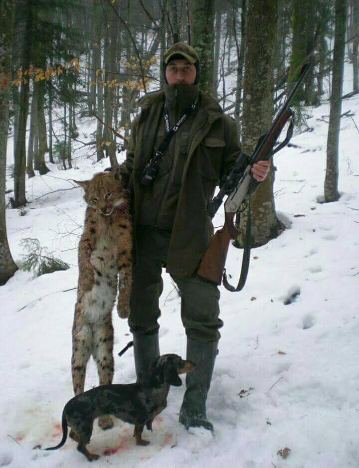 """""""Залишити без рук"""": на Закарпатті лісничі вбили рись і виставили фото мертвої тварини в соцмережі"""
