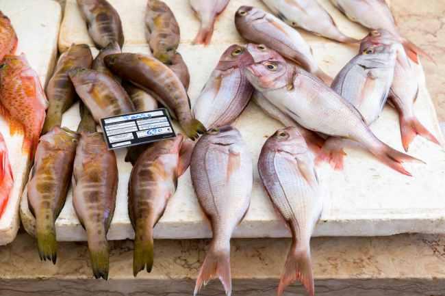 Ця риба смертельно небезпечна! Тисячі людей труяться кожен день