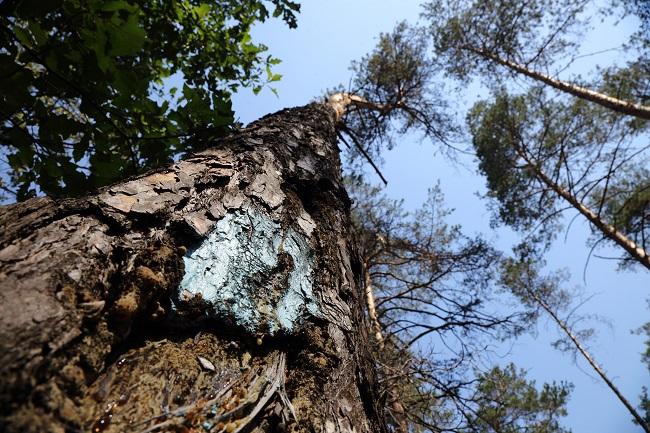 Позначки під спіл дерева
