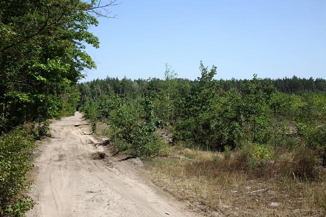 Вирубка лісу в Пуща-Водиці