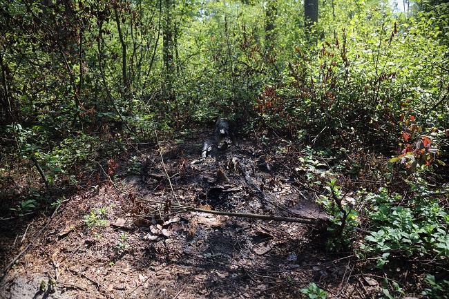 Місця спалювання деревини