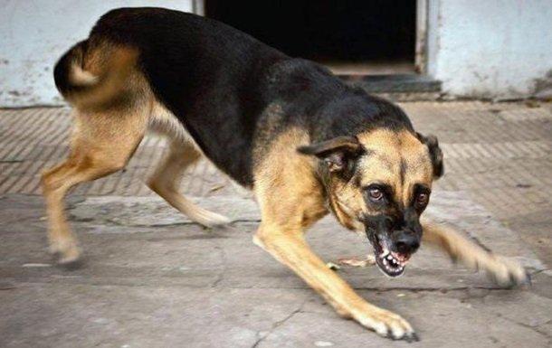 У Миколаєві скажений пес покусав 12 людей: названа зона карантину