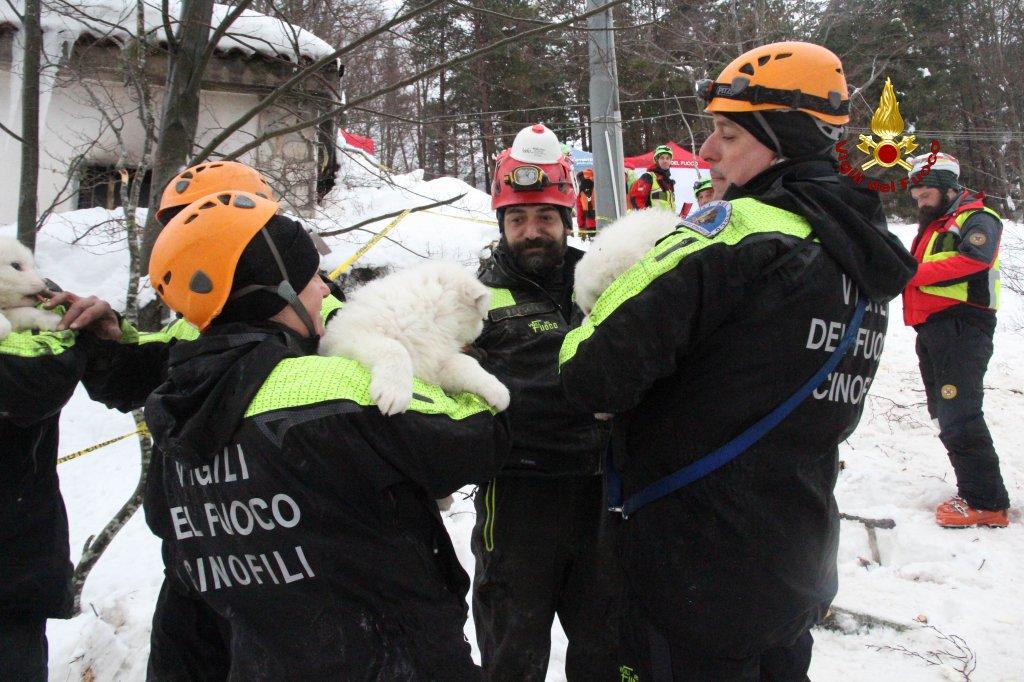 Cотрудники экстренных служб достали из-под завалов отеля «Ригопьяно» 3-х щенков