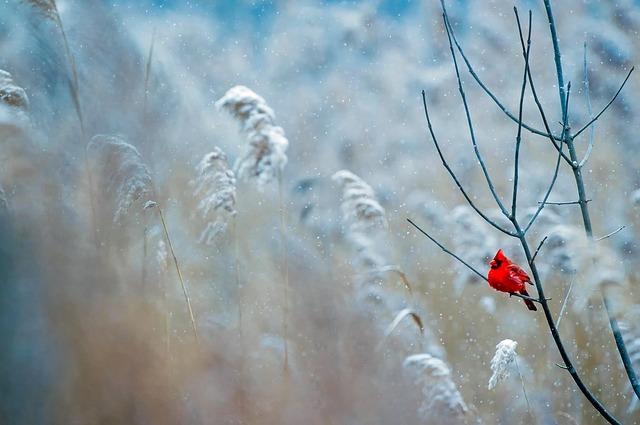 Морозы возвращаются: украинцев предупредили о резком изменении погоды