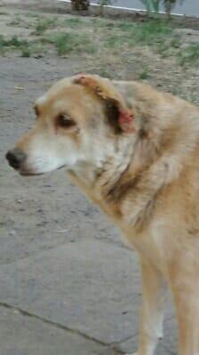 Попросив дітей відвернутися: під Одесою чоловік жорстко поглумився над собакою