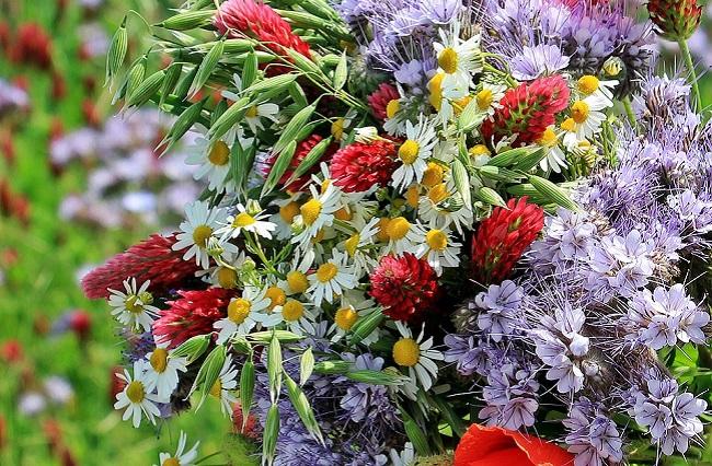 Символ праздника - летние цветы и зелень